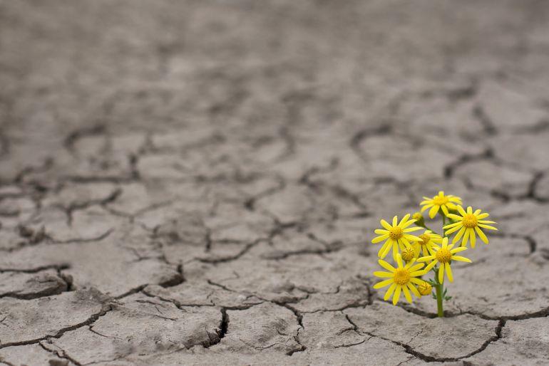 Resultado de imagen para resiliencia