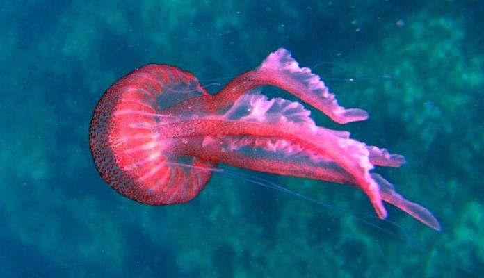 Resultado de imagen para animales marino