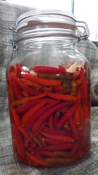 Red peppers, garlic and salt make up this brew.  The red peppers have more sugar than the green, so fermentation works better.