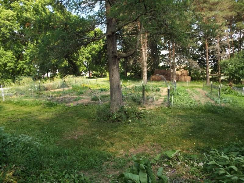 DSCF3520side garden