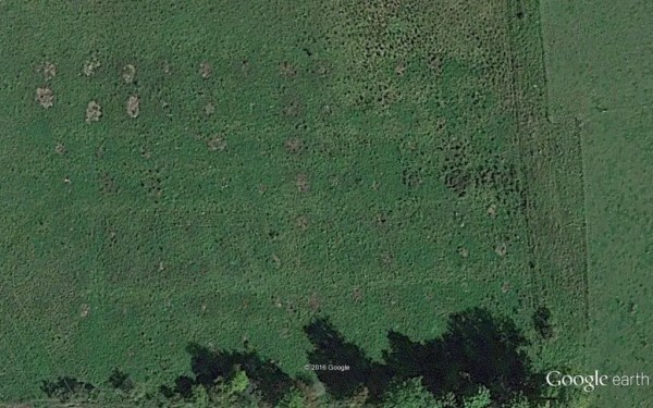 bale-grazing-aerial