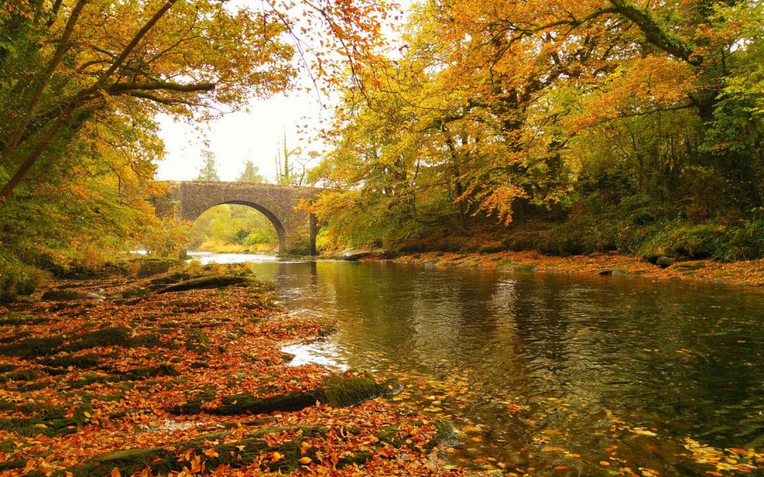 Beautiful Fall Scenes Wallpaper Six Ways To Look After Your Local River Westcountry