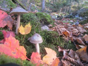 Champignons d'automne, by Jim Damberger