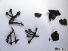 Raíces de uvas disecadas y uvas pisadas encontradas durante la excavación