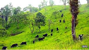 Pérdida de bosque para ganadería