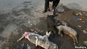 Cadáveres de cerdos encontrados en los ríos alrededor de Shanghái