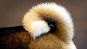 la cola de un perro