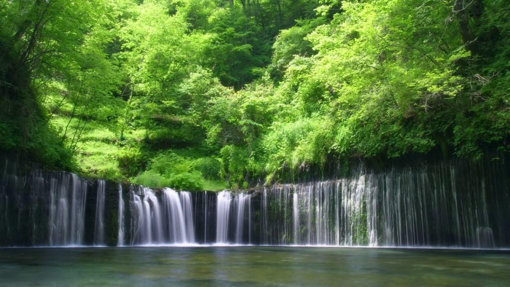 HD Forest Wallpapers Wide Screen Wallpaper 1080p2K4K