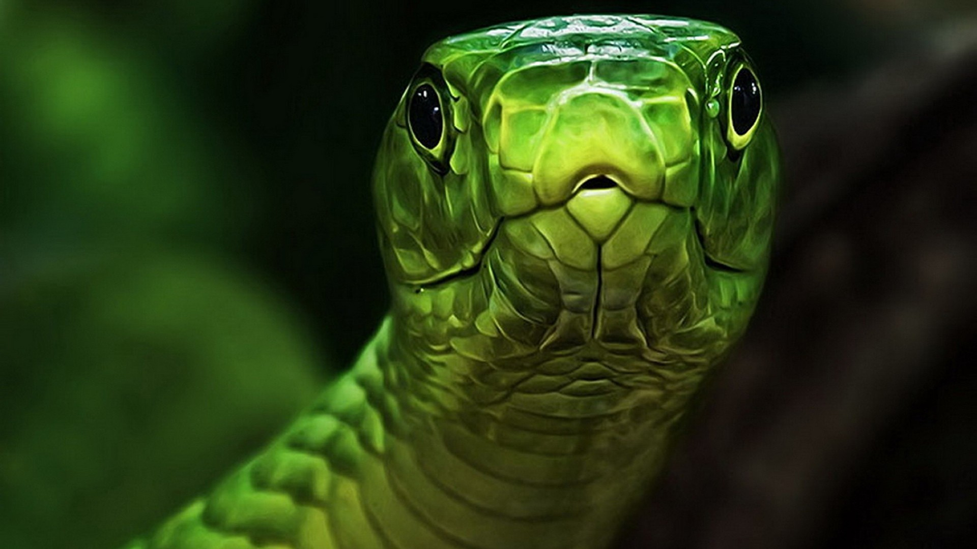 "what you lookin at"" green snake wallpaper hd 