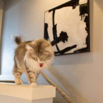 Art in Residence