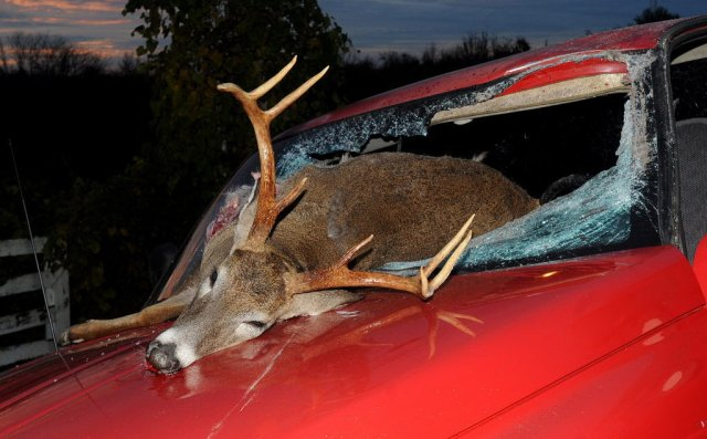 deer-accident-66bfa12507011c421