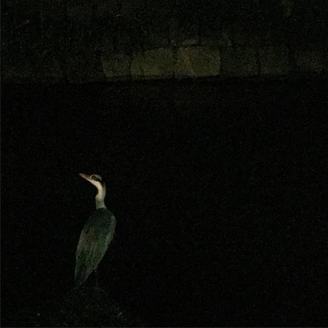 闇の中に佇む #bird #night #dark #river