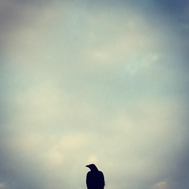 バードマン1号 #イマソラ #mysky #sky #cloud #bird #crow