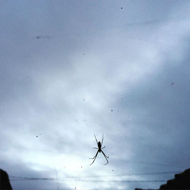 台風の影響で、ちょっと寒いくらい!#イマソラ #mysky #sky #cloud #cloudy #wind #spider #gray