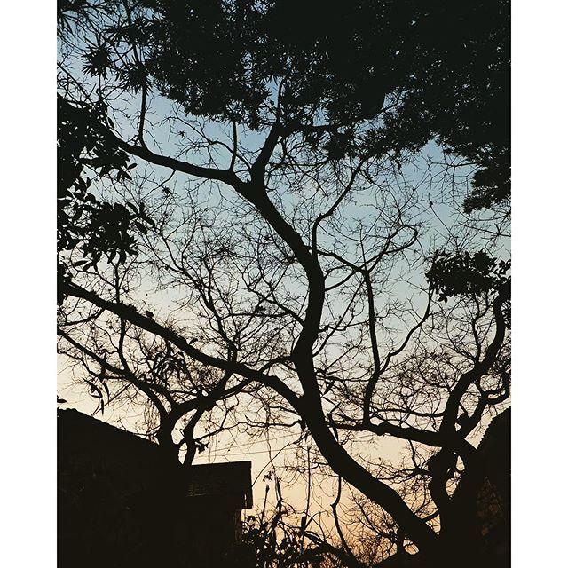 2015年最後の空は雨の後の曇り空。でも、暮れるにつれ晴れてきて、いい感じ!さようなら。またあした!ありがとう2015 #イマソラ #mysky #sky #sunset #trees #branches #shadow #winter #december #2015 #last