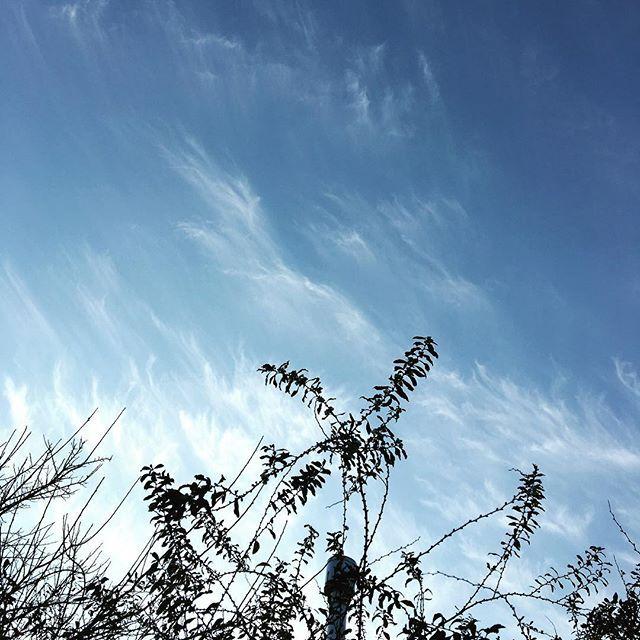 おはようございます。今日はちょっとゆっくり出来るかな〜?冬らしい寒い朝ですが、ユキヤナギ咲いてます。#イマソラ #mysky #sky #morning #cloud #fine #trees #branches #winter #december #2015