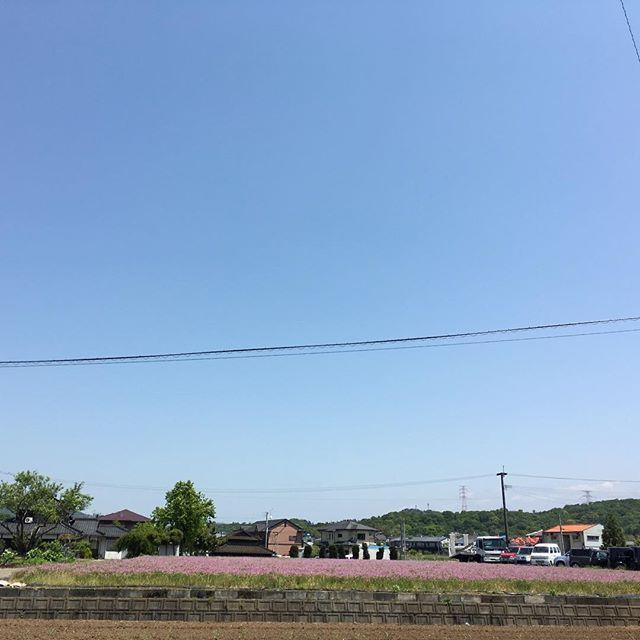震災後、初めて町を出ました。いつものルートでも被災しているところ、大丈夫なところ、差があります。レンゲ畑が美しくて、涙が出ました。みなさんは良い1日を。#イマソラ #mysky #sky #fine #blue #town #spring #kumamoto #japan #2016