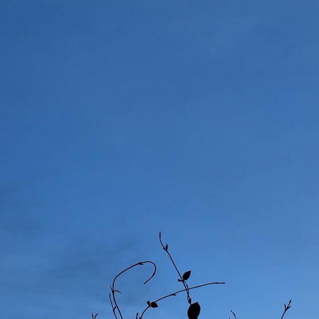 雨の後の夕暮れ。まだ蝉が鳴いていますよ#イマソラ #mysky #sky #blue #leaves #cicada #sound #autumn #fine