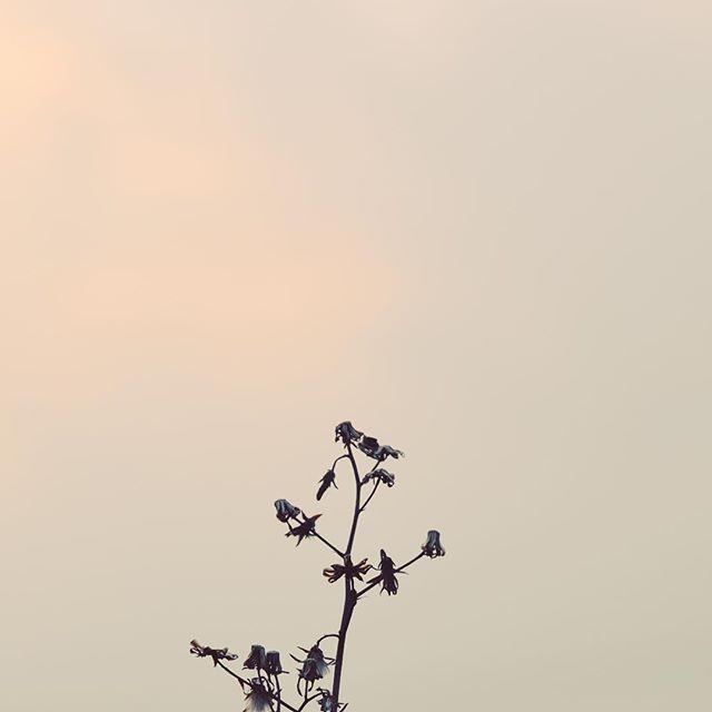 寝起きの空はもやっと。明日はがんばります。#イマソラ #mysky #sky #fine #sunset #grass