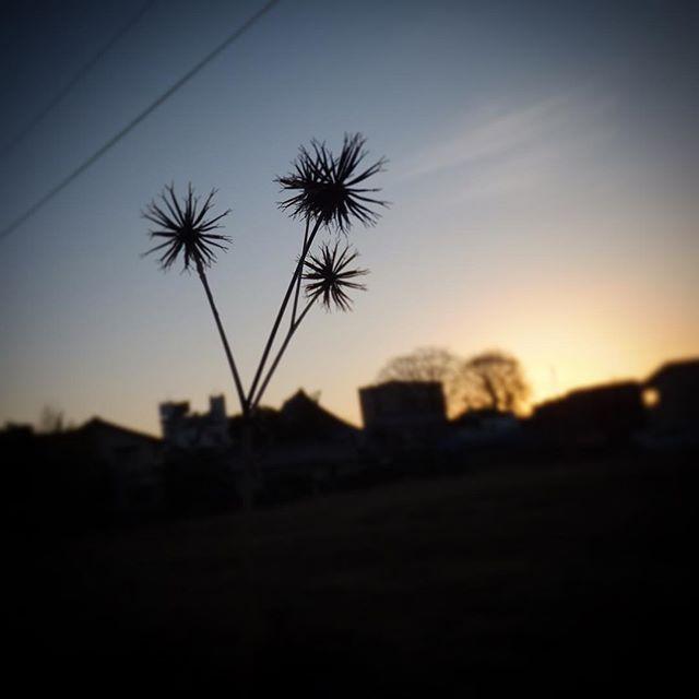 最近は写真を撮ってもすっかり忘れていて、夜中に思い出す。きれいな夕焼けを見るとそれだけでしあわせな気分になってしまうのです。#イマソラ #mysky #sky #fine #sunset #plants #shadow #town #winter #stars #february #2017 #happy