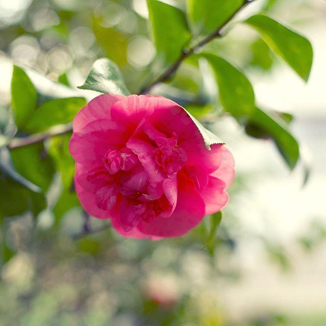 雨が降ったり、いつものことながら、確実に春になってゆきますね。#イマソラ #mysky #flower #spring #march #2017 #pink #花 #雨の後 #しっとり