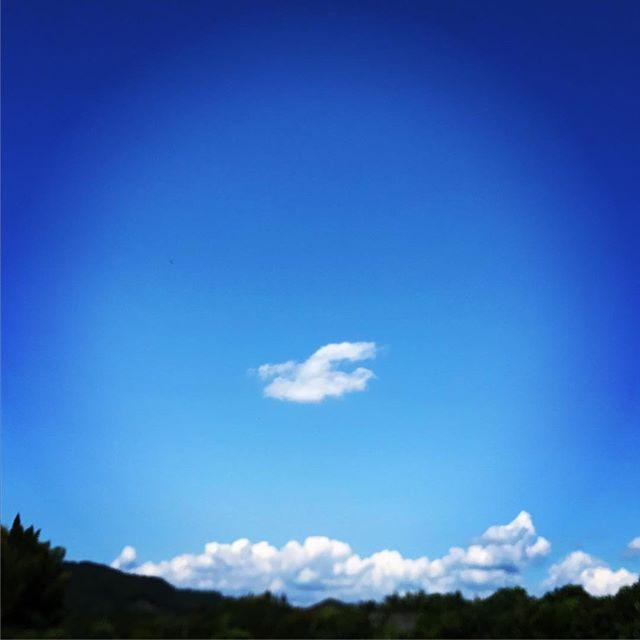 雲のトリ発見!まだセミが鳴いていました。#イマソラ #mysky #sky #fine #blue #cloud #bird