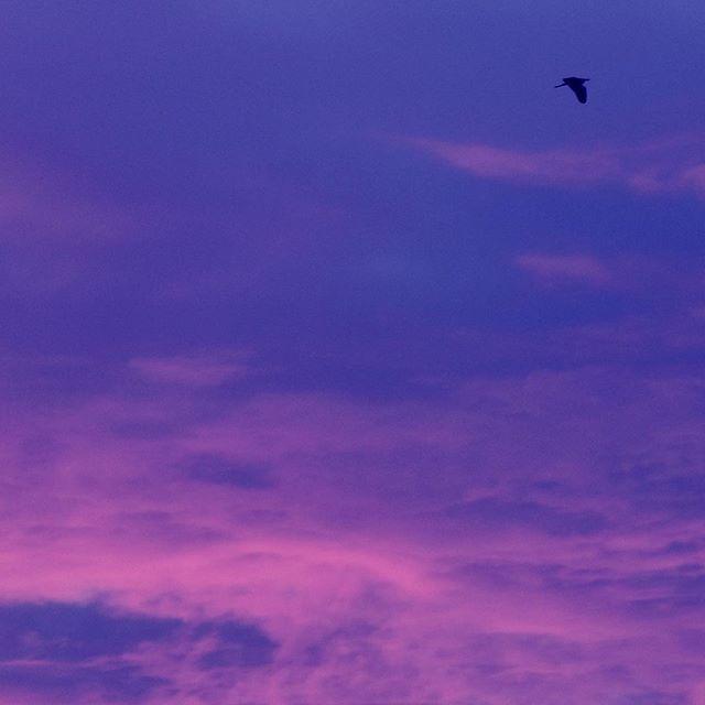 今日は一日忙しかったので、天気雨の虹をゲット出来ず、残念。日は落ちてしまいました。このくらいの雨じゃ、蒸すかな?明日も熱中症に気をつけて。お疲れさま#イマソラ #mysky #sky #sunset #evening #cloud #rain #july #hotday #bird