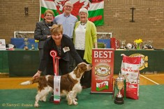 Best in Show - Taimere's Twister Round Nyliram JW ShCm with owners Tom and Jane Graham and Judges Cath Dodds on the left and Pat Butler-Holley on the right. Welsh Springer Spaniel Club of South Wales Championship Show 26-03-2016, held at Chepstow, Wales.