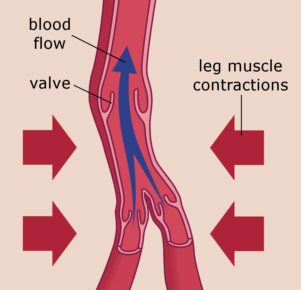 hight resolution of veins