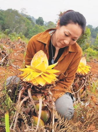 在雲南西雙版納的熱帶雨林裡,雨林守護者李旻果和丈夫德國著名生態學家馬悠的愛情故事,就藏在雨林的最深處,他們守護440萬平方公尺的雨林,每一朵花,每一片葉子,都成為他們愛情最好的見證。