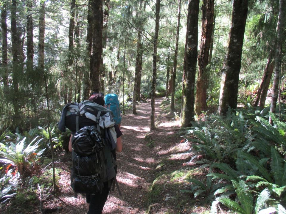 Trampers walking along Swamp Track