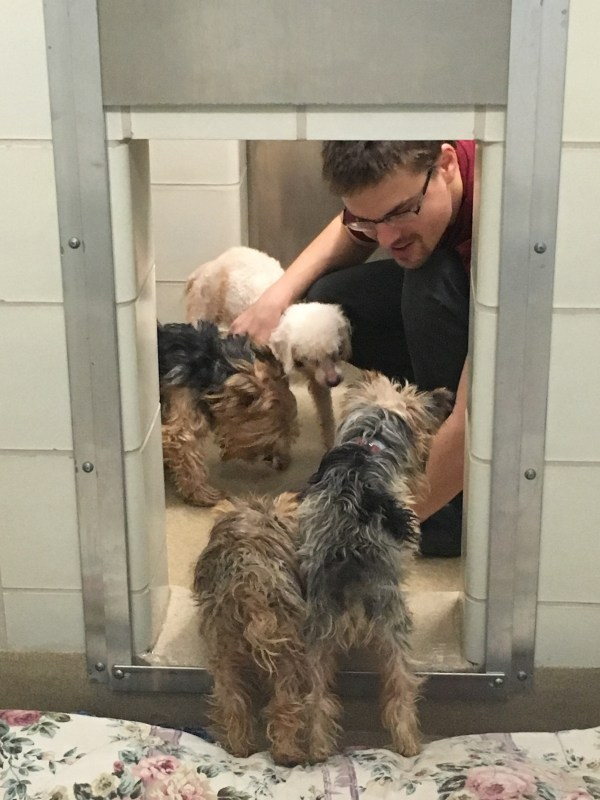 Dogs seized from Rockville home prepared for adoption