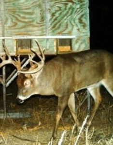 Methods to age  buck also top whitetail habitat solutions rh whitetailhabitatsolutions