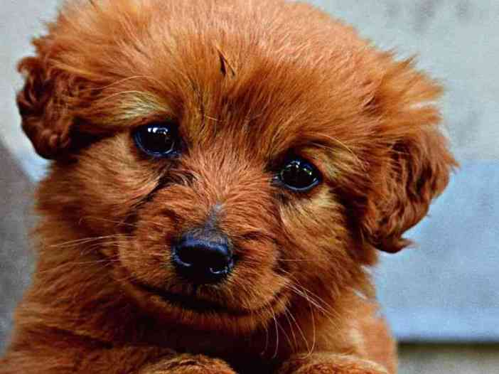 Cute puppy image for whatsapp profile picture