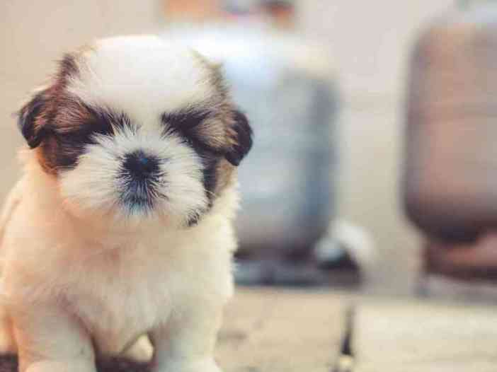 Cute puppy picture for whatsapp profile picture