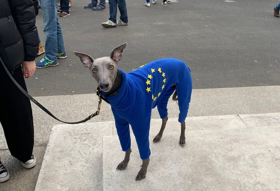 Evens dogs took part in the vote and we dont mean Nigel Farage
