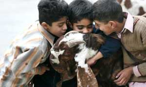 Children kiss their sacrificial goat as the preparations for Eid-ul-Adha - The Eid of Qurbani