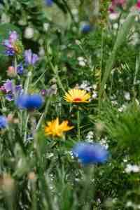 field summer sun garden