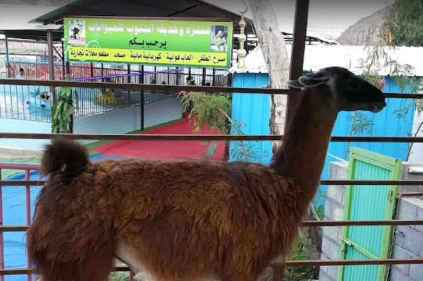 حديقة حيوانات في ابها