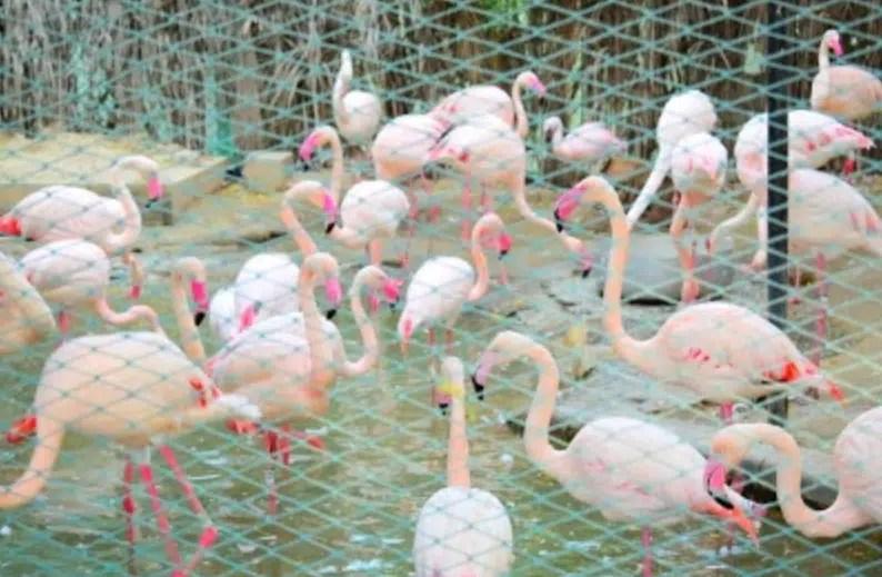 حديقة حيوان دبي