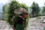 an old woman carrying grasses