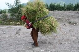 carrying grass
