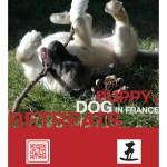 Puppy & Dog Retreats 2015