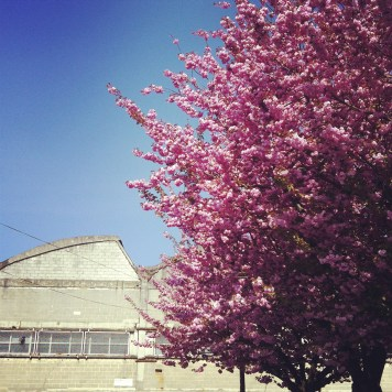 cerisier brocante - wundertute