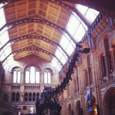 musee histoire naturel londres - wundertute