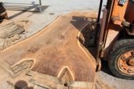 WunderWoods Siberian elm cut natural live edge slab table top