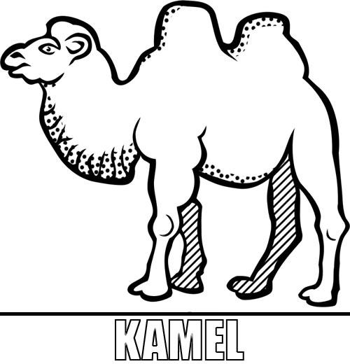 Malvorlage Kamel Zum Ausdrucken