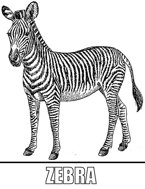Malvorlagen Zebra