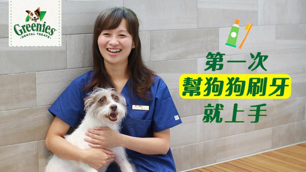 第一次幫狗狗刷牙就上手——寵物齒科專家蔡依津獸醫師親自指導 - 窩窩|專注為動物發聲的獨立媒體