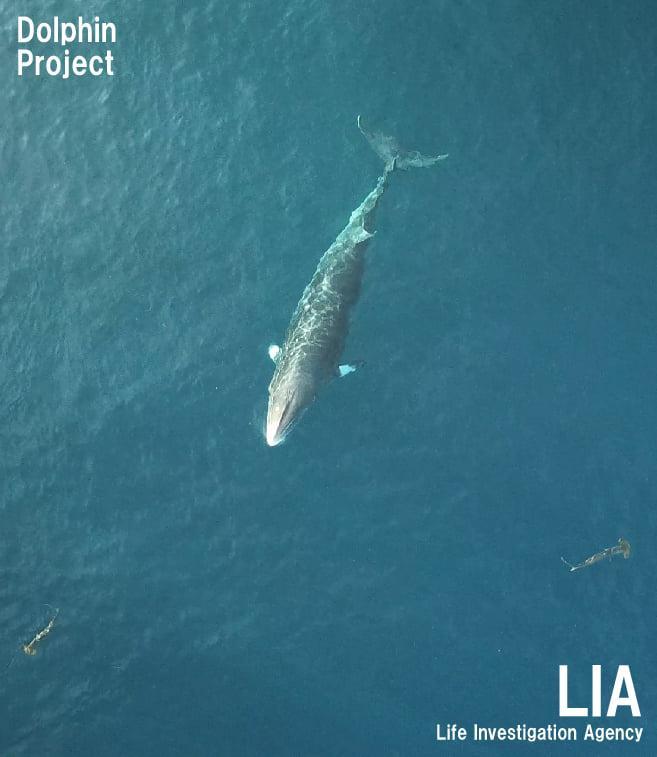 是生命還是漁獲?從日本漁業混獲的小鬚鯨遭處決談起 - 窩窩|專注為動物發聲的獨立媒體